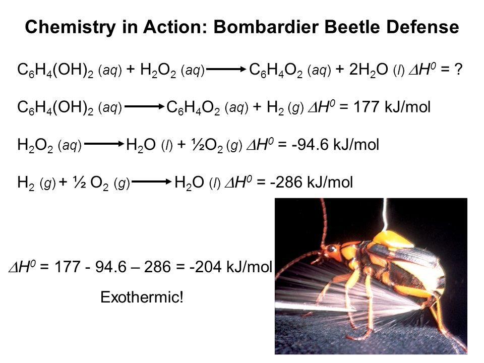 Chemistry in Action: Bombardier Beetle Defense C 6 H 4 (OH) 2 (aq) + H 2 O 2 (aq) C 6 H 4 O 2 (aq) + 2H 2 O (l) H 0 = ? C 6 H 4 (OH) 2 (aq) C 6 H 4 O