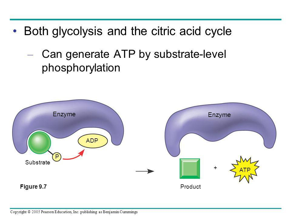 Copyright © 2005 Pearson Education, Inc. publishing as Benjamin Cummings Both glycolysis and the citric acid cycle – Can generate ATP by substrate-lev