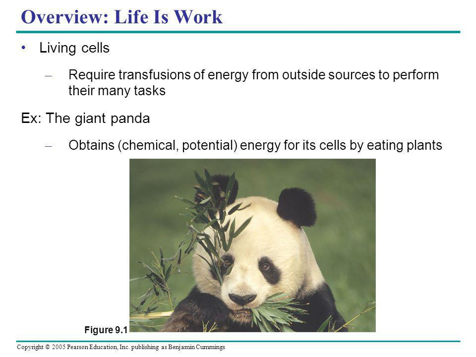 Copyright © 2005 Pearson Education, Inc. publishing as Benjamin Cummings Overview: Life Is Work Living cells – Require transfusions of energy from out