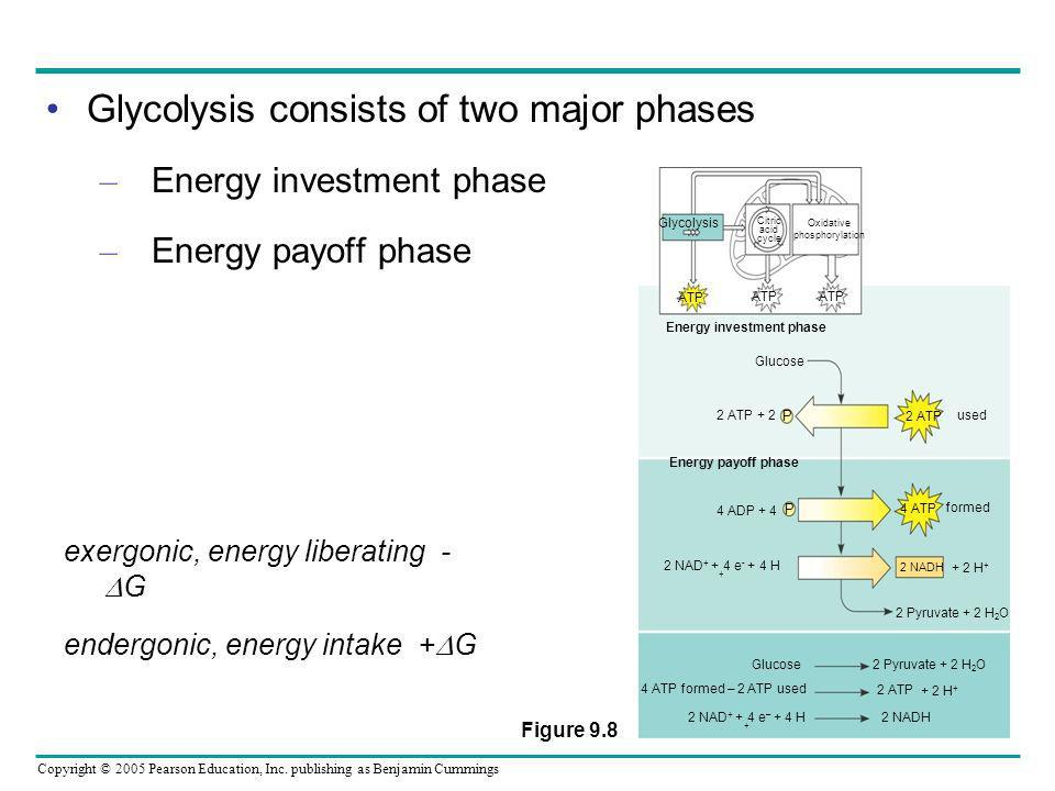Copyright © 2005 Pearson Education, Inc. publishing as Benjamin Cummings Glycolysis consists of two major phases – Energy investment phase – Energy pa
