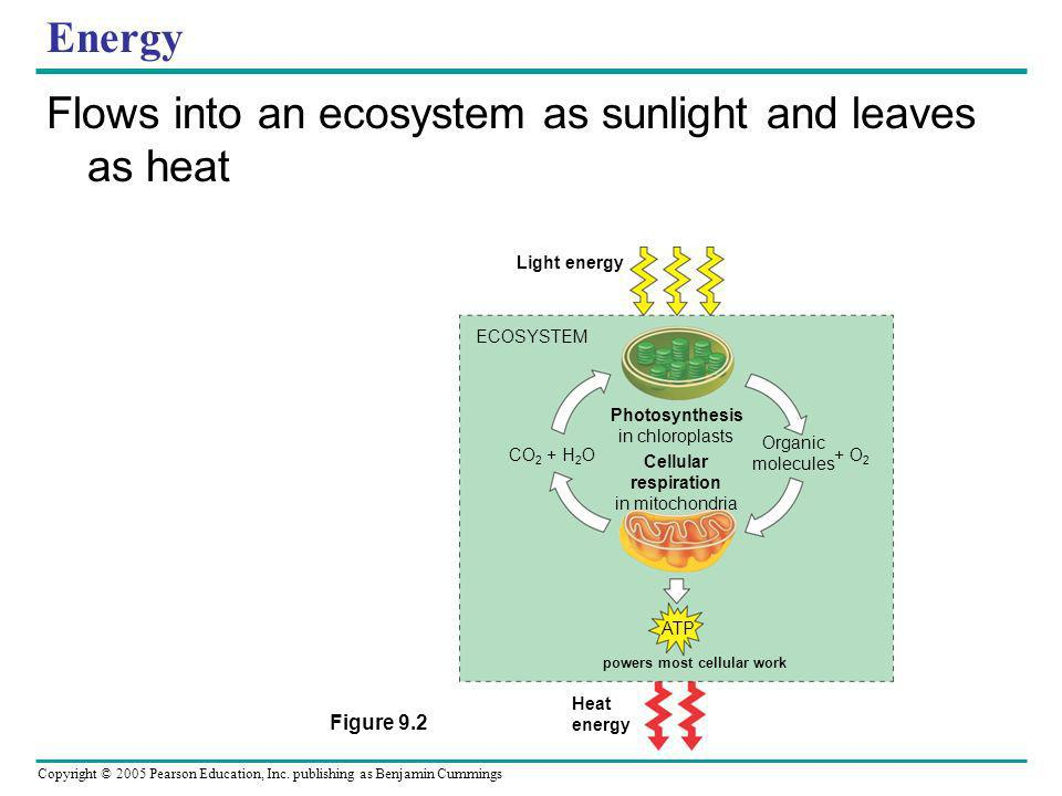 Copyright © 2005 Pearson Education, Inc. publishing as Benjamin Cummings Energy Flows into an ecosystem as sunlight and leaves as heat Light energy EC