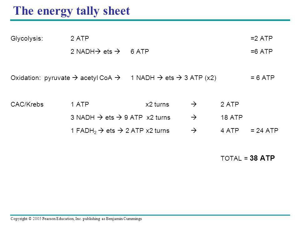 Copyright © 2005 Pearson Education, Inc. publishing as Benjamin Cummings The energy tally sheet Glycolysis:2 ATP=2 ATP 2 NADH ets 6 ATP=6 ATP Oxidatio