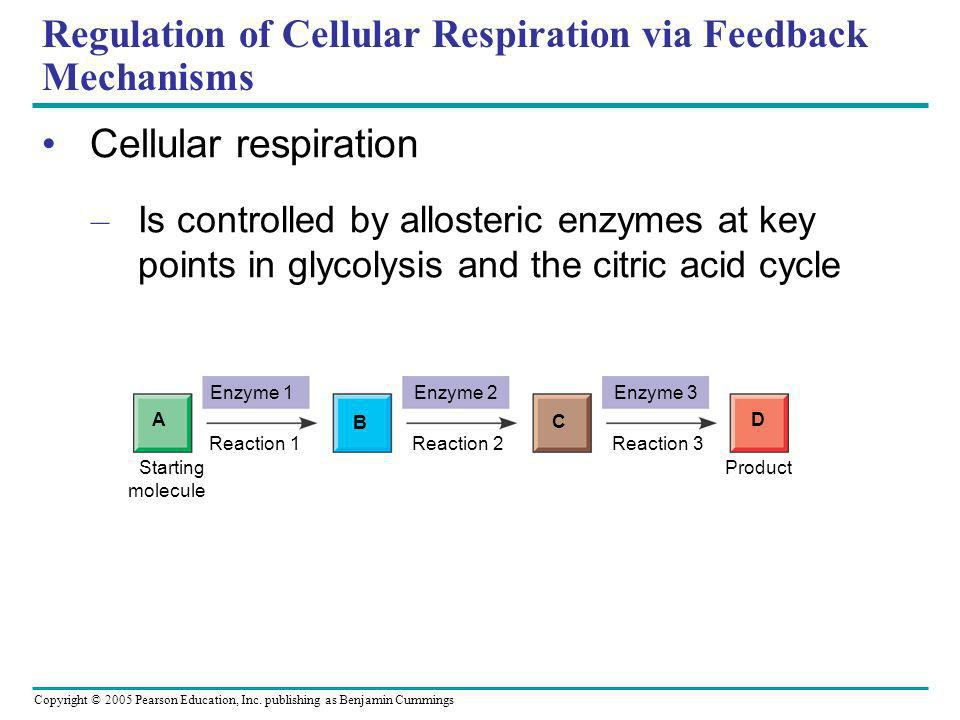 Copyright © 2005 Pearson Education, Inc. publishing as Benjamin Cummings Regulation of Cellular Respiration via Feedback Mechanisms Cellular respirati