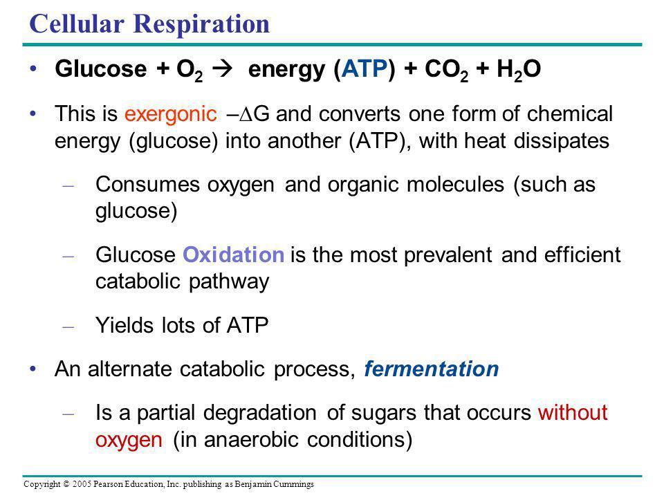 Copyright © 2005 Pearson Education, Inc. publishing as Benjamin Cummings Cellular Respiration Glucose + O 2 energy (ATP) + CO 2 + H 2 O This is exergo