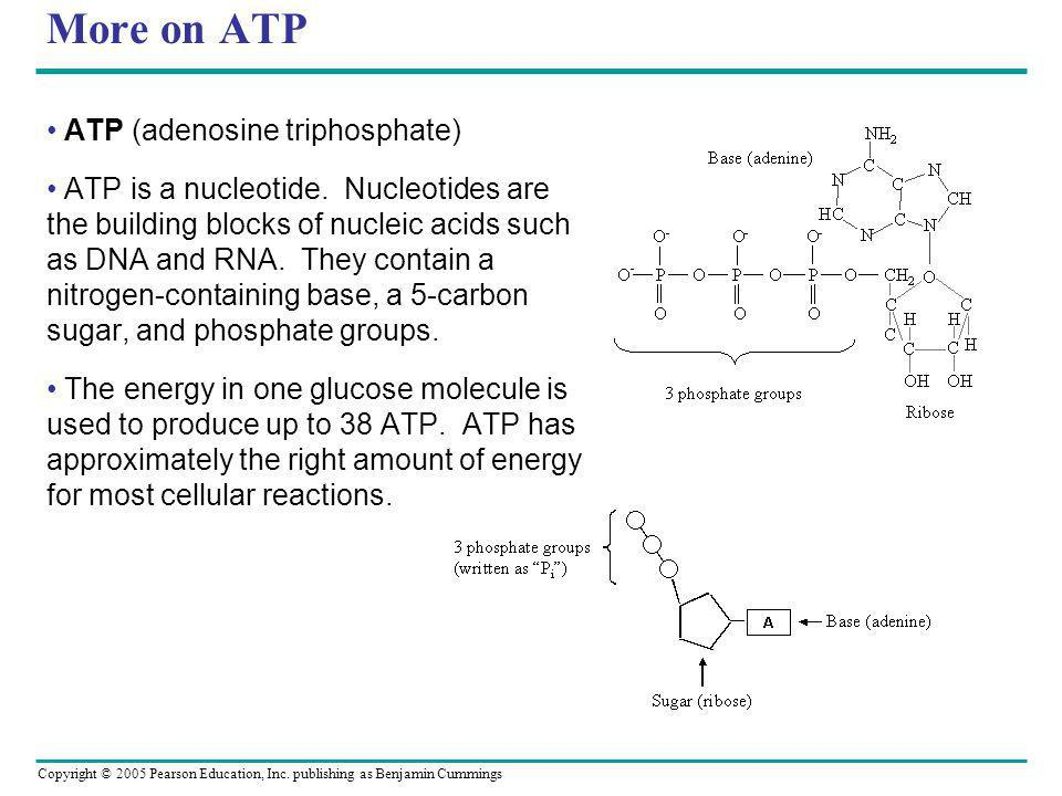 Copyright © 2005 Pearson Education, Inc. publishing as Benjamin Cummings More on ATP ATP (adenosine triphosphate) ATP is a nucleotide. Nucleotides are