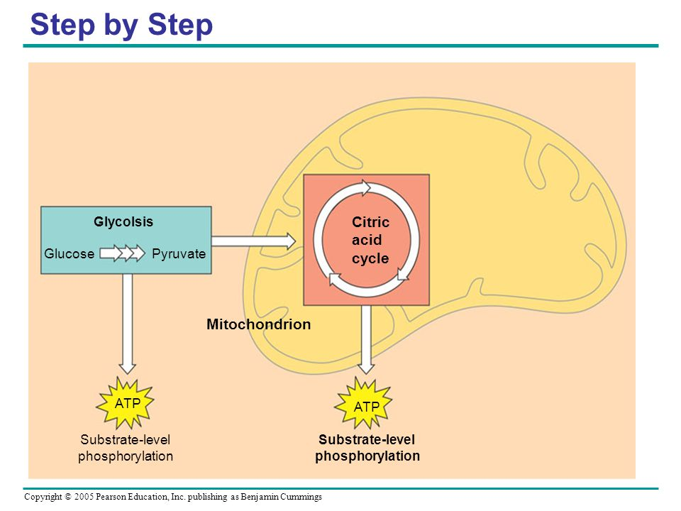 Copyright © 2005 Pearson Education, Inc. publishing as Benjamin Cummings Step by Step ATP Substrate-level phosphorylation Mitochondrion Glycolsis Gluc