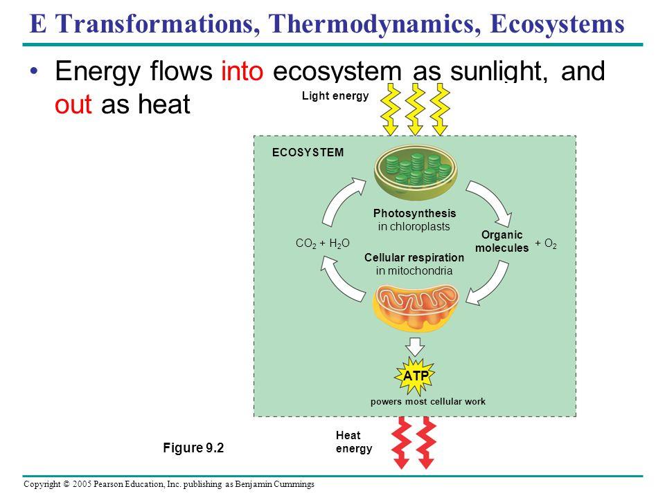 Copyright © 2005 Pearson Education, Inc. publishing as Benjamin Cummings E Transformations, Thermodynamics, Ecosystems Energy flows into ecosystem as