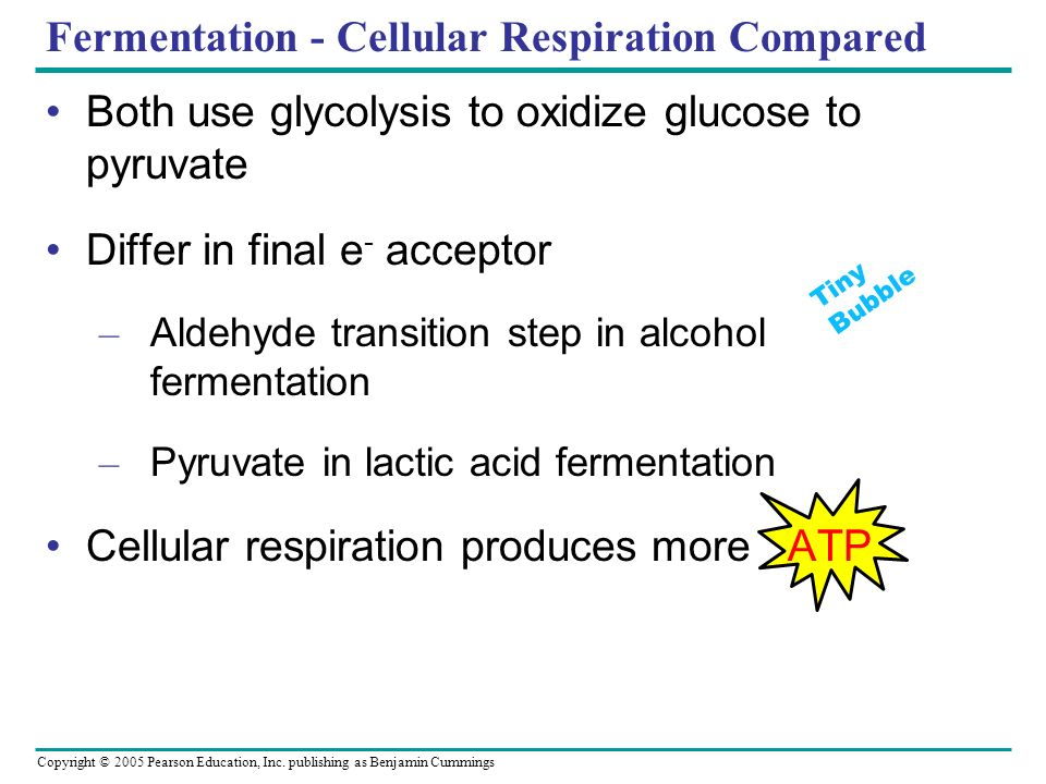 Copyright © 2005 Pearson Education, Inc. publishing as Benjamin Cummings Fermentation - Cellular Respiration Compared Both use glycolysis to oxidize g