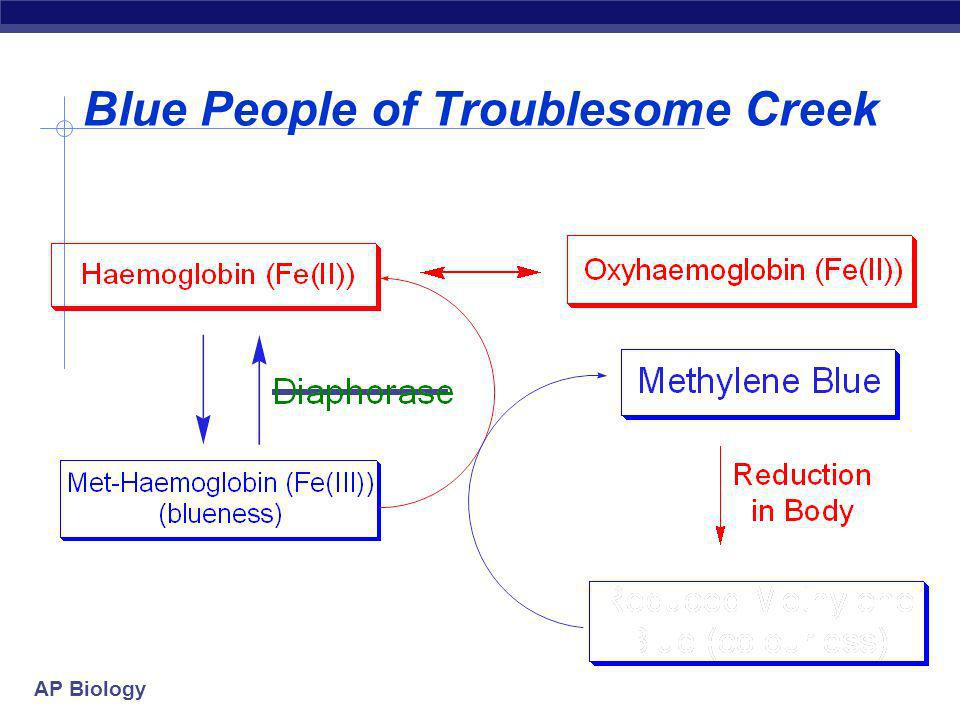 AP Biology Blue People of Troublesome Creek 6 generations later Ben Stacy born (1975) Bens skin blue - no apparent cause (1998) lips and fingernails s