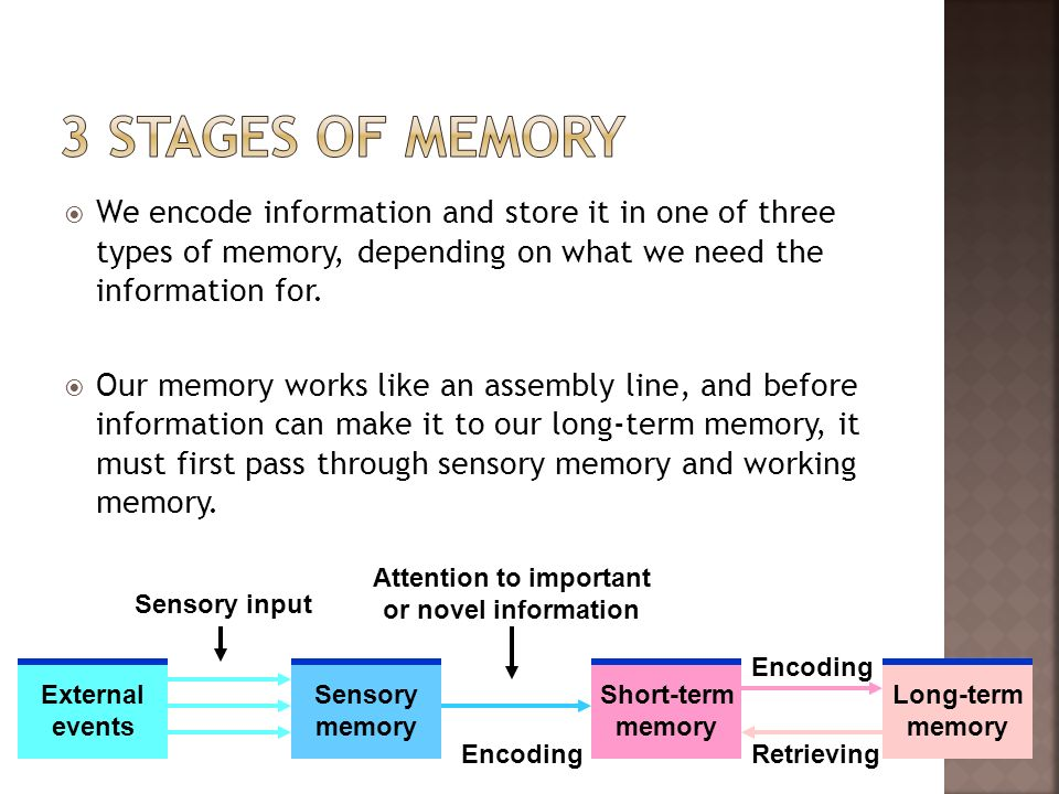 We encode information and store it in one of three types of memory, depending on what we need the information for. Our memory works like an assembly l