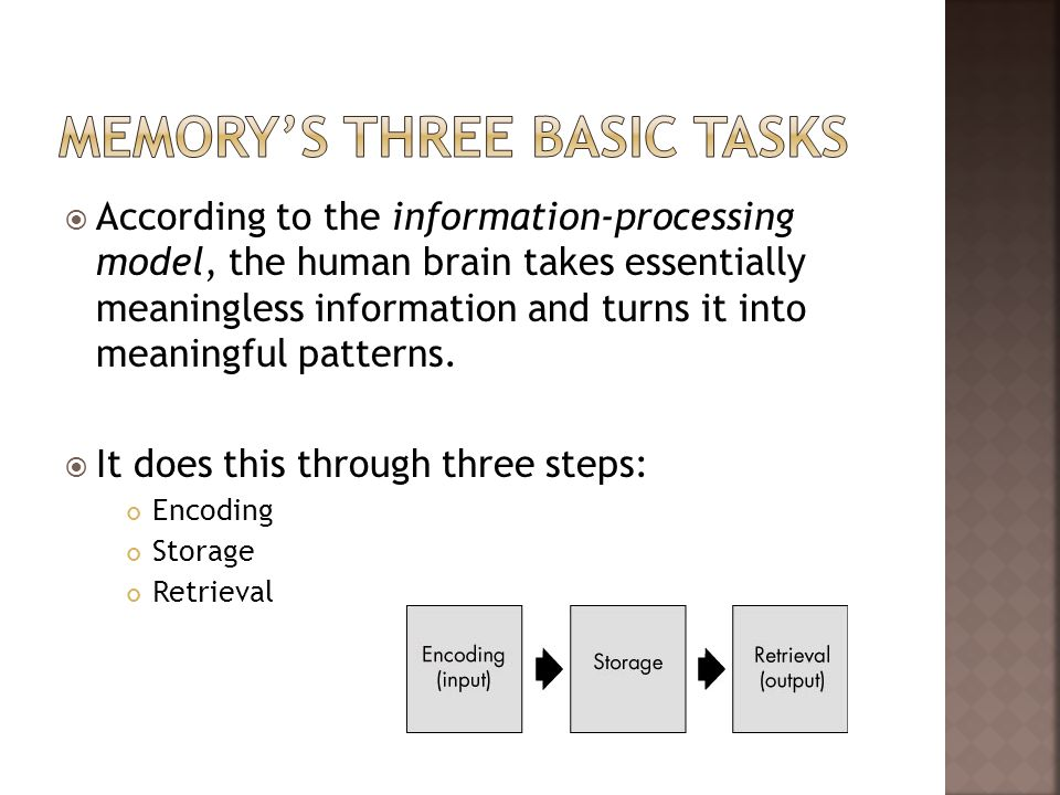 According to the information-processing model, the human brain takes essentially meaningless information and turns it into meaningful patterns. It doe