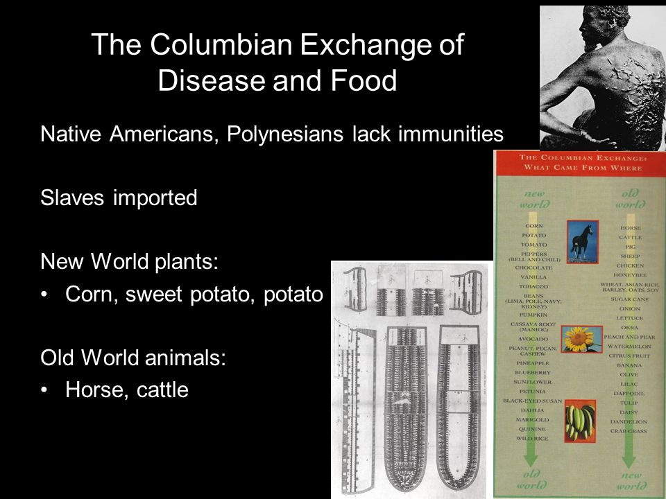 The Columbian Exchange of Disease and Food Native Americans, Polynesians lack immunities Slaves imported New World plants: Corn, sweet potato, potato