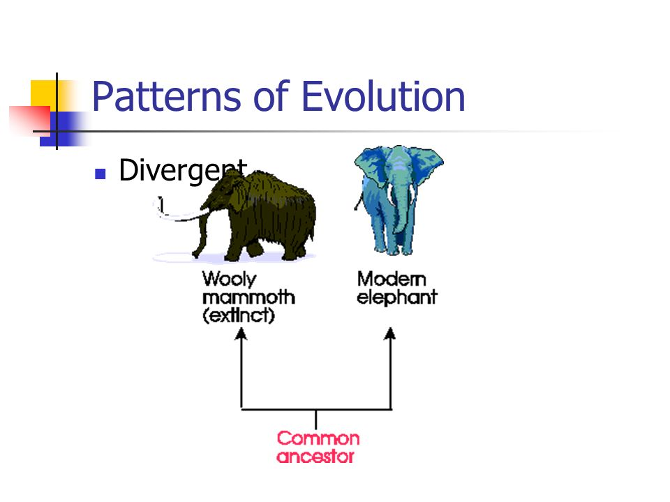 Patterns of Evolution Divergent