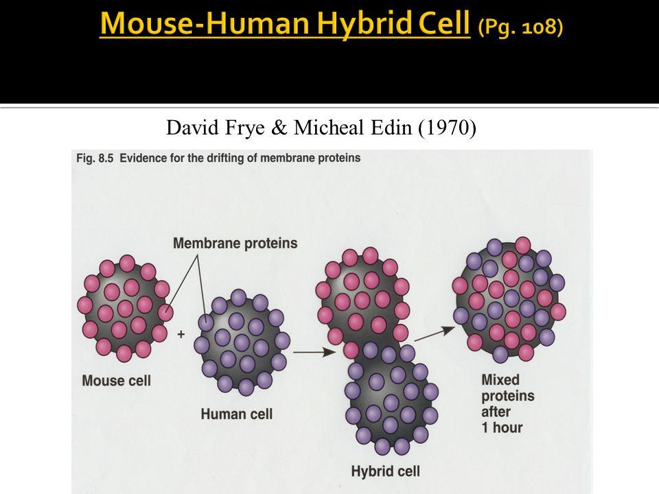 David Frye & Micheal Edin (1970)