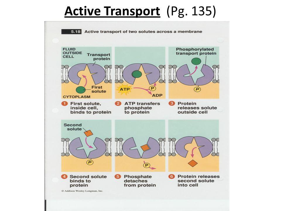 Active Transport (Pg. 135)