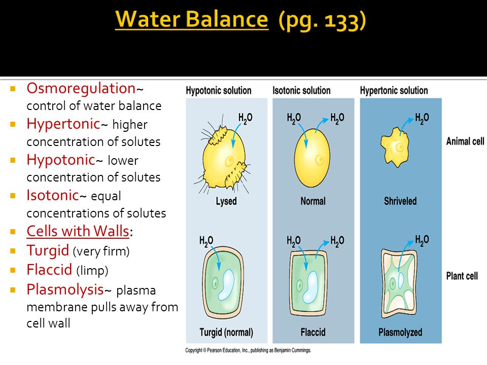 Osmoregulation~ control of water balance Hypertonic~ higher concentration of solutes Hypotonic~ lower concentration of solutes Isotonic~ equal concent