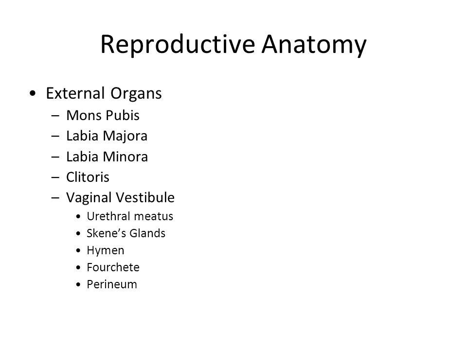 Reproductive Anatomy External Organs –Mons Pubis –Labia Majora –Labia Minora –Clitoris –Vaginal Vestibule Urethral meatus Skenes Glands Hymen Fourchet
