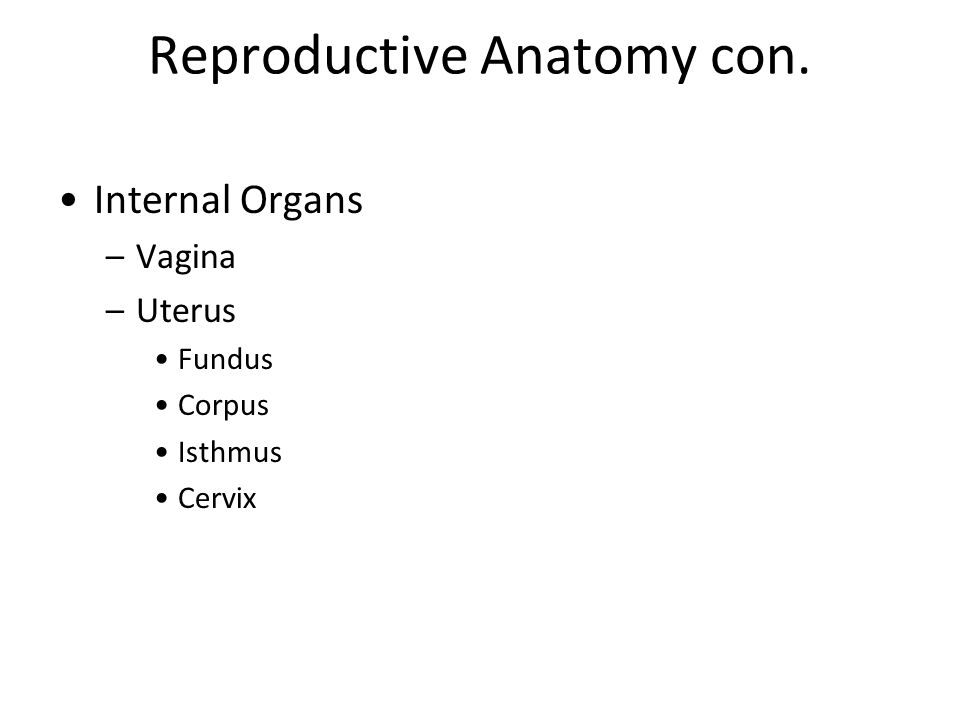 Fallopian Tubes Functions – provide passageway for ovum into uterus, site for fertilization Fimbriae – most distal part, wavelike motion that pulls ovum into tube Ampulla – site for fertilization Isthmus - close to uterus, site for BTL