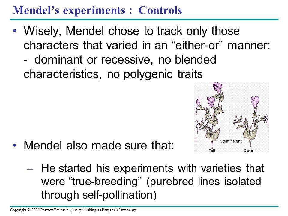 Copyright © 2005 Pearson Education, Inc. publishing as Benjamin Cummings Mendels experiments : Controls Wisely, Mendel chose to track only those chara