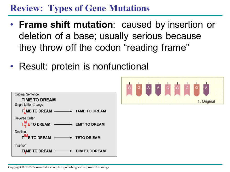 Copyright © 2005 Pearson Education, Inc. publishing as Benjamin Cummings Review: Types of Gene Mutations Frame shift mutation: caused by insertion or