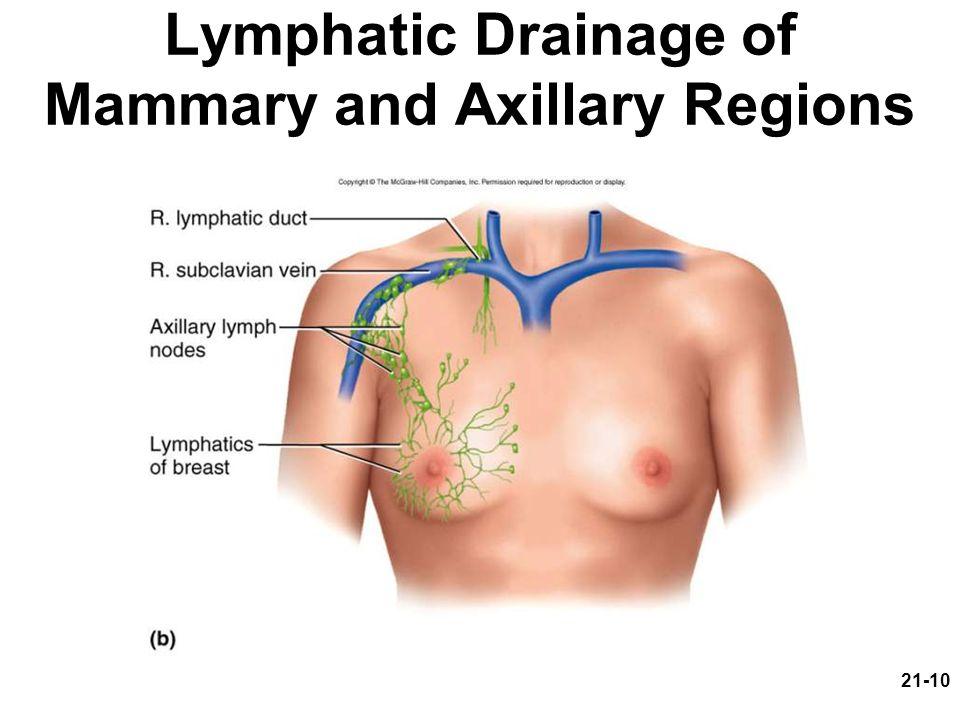 21-10 Lymphatic Drainage of Mammary and Axillary Regions