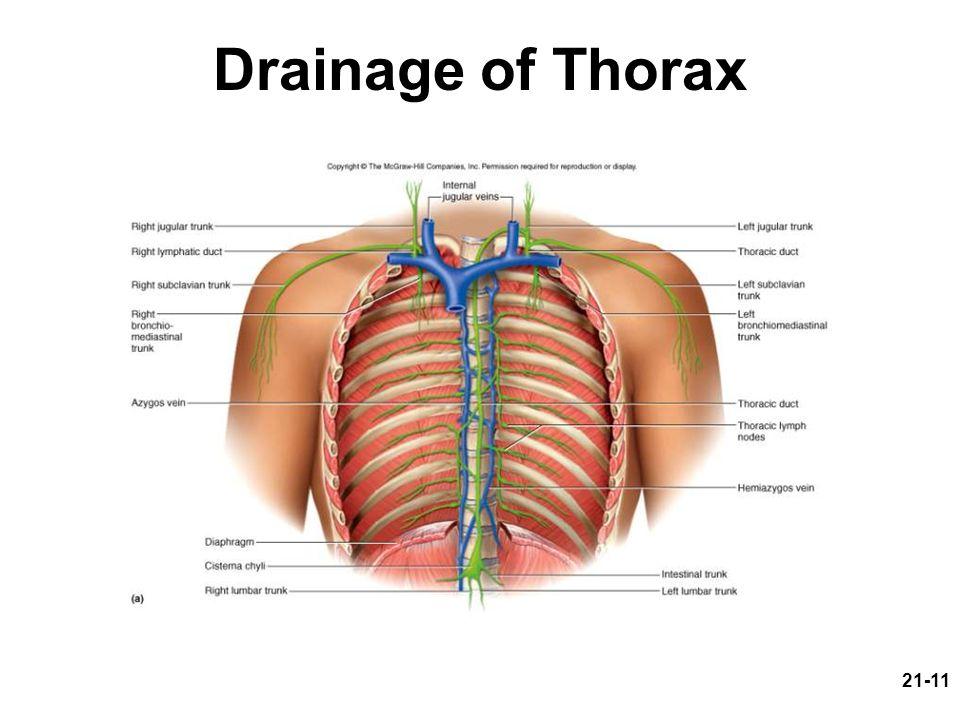 21-11 Drainage of Thorax