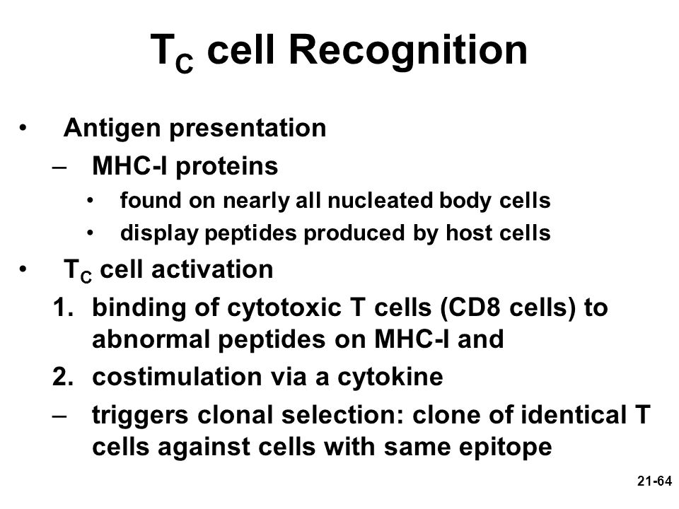 21-64 T C cell Recognition Antigen presentation –MHC-I proteins found on nearly all nucleated body cells display peptides produced by host cells T C cell activation 1.binding of cytotoxic T cells (CD8 cells) to abnormal peptides on MHC-I and 2.costimulation via a cytokine –triggers clonal selection: clone of identical T cells against cells with same epitope