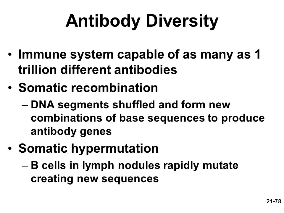 21-78 Antibody Diversity Immune system capable of as many as 1 trillion different antibodies Somatic recombination –DNA segments shuffled and form new combinations of base sequences to produce antibody genes Somatic hypermutation –B cells in lymph nodules rapidly mutate creating new sequences