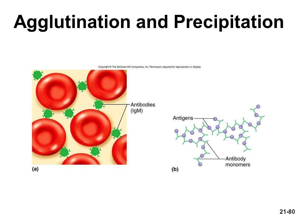 21-80 Agglutination and Precipitation