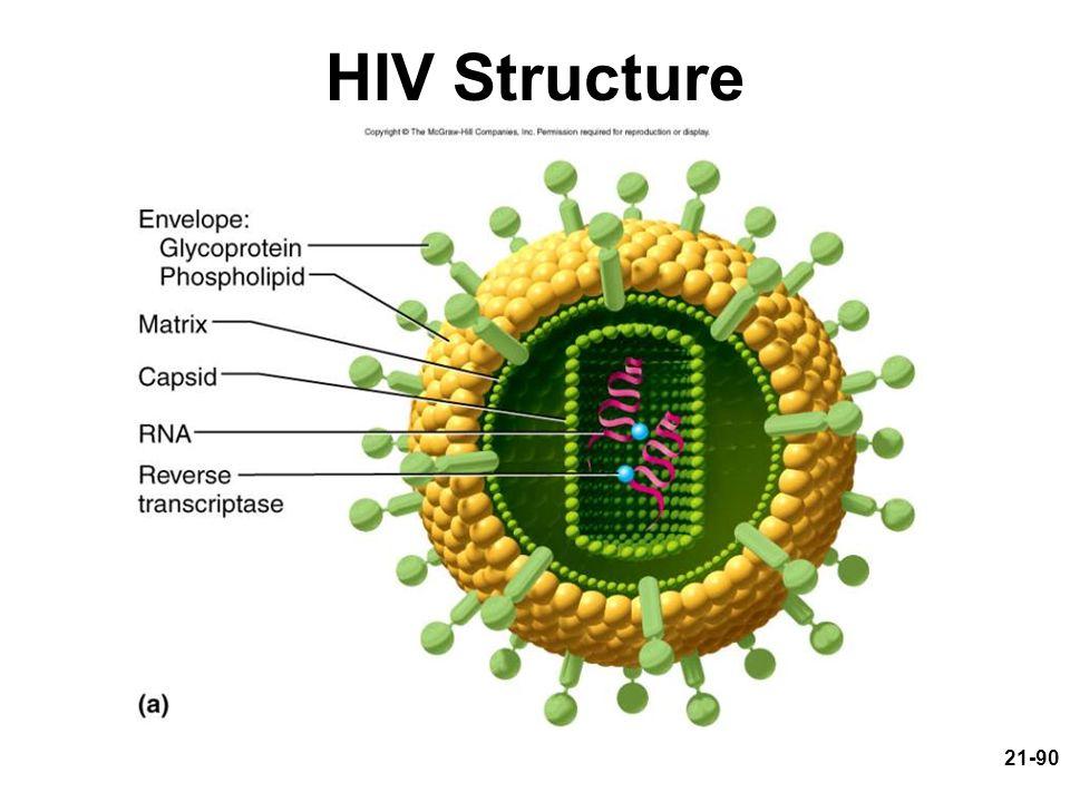 21-90 HIV Structure