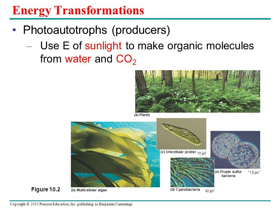 Copyright © 2005 Pearson Education, Inc.publishing as Benjamin Cummings CAM Plants (e.g.
