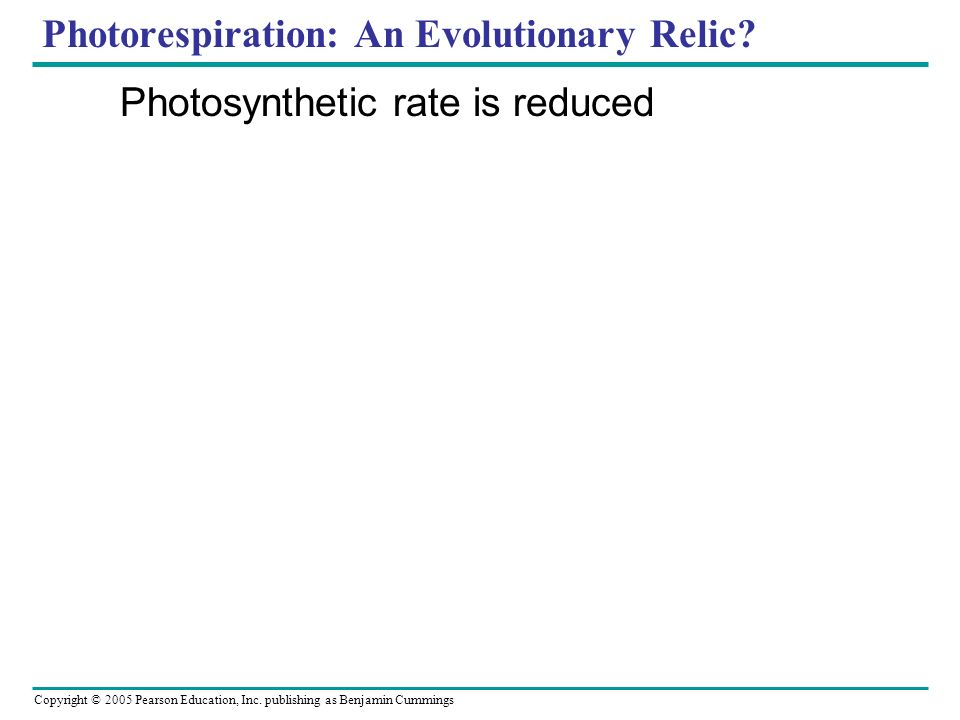 Copyright © 2005 Pearson Education, Inc. publishing as Benjamin Cummings Photorespiration: An Evolutionary Relic? Photosynthetic rate is reduced
