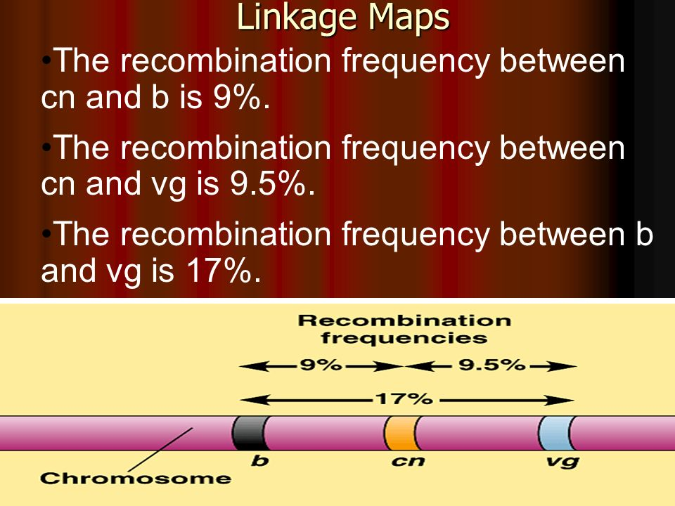 Linkage Maps The recombination frequency between cn and b is 9%. The recombination frequency between cn and vg is 9.5%. The recombination frequency be