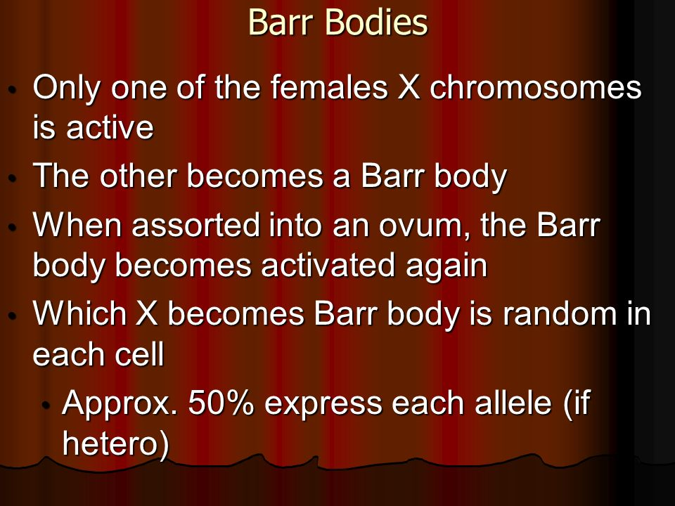 Barr Bodies Only one of the females X chromosomes is active Only one of the females X chromosomes is active The other becomes a Barr body The other be