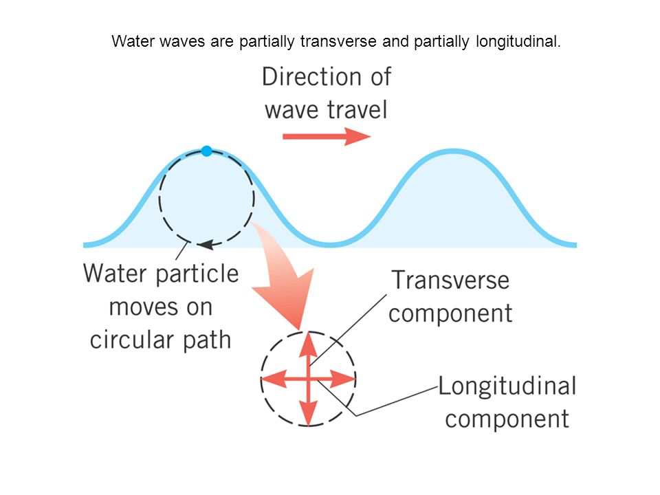 Water waves are partially transverse and partially longitudinal.