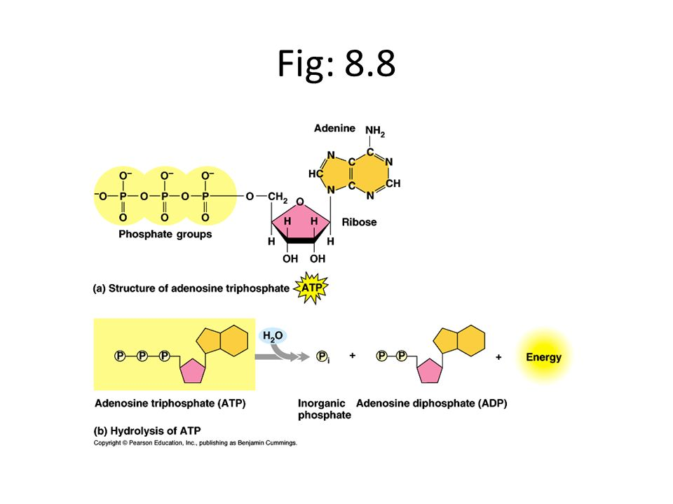 Fig: 8.8