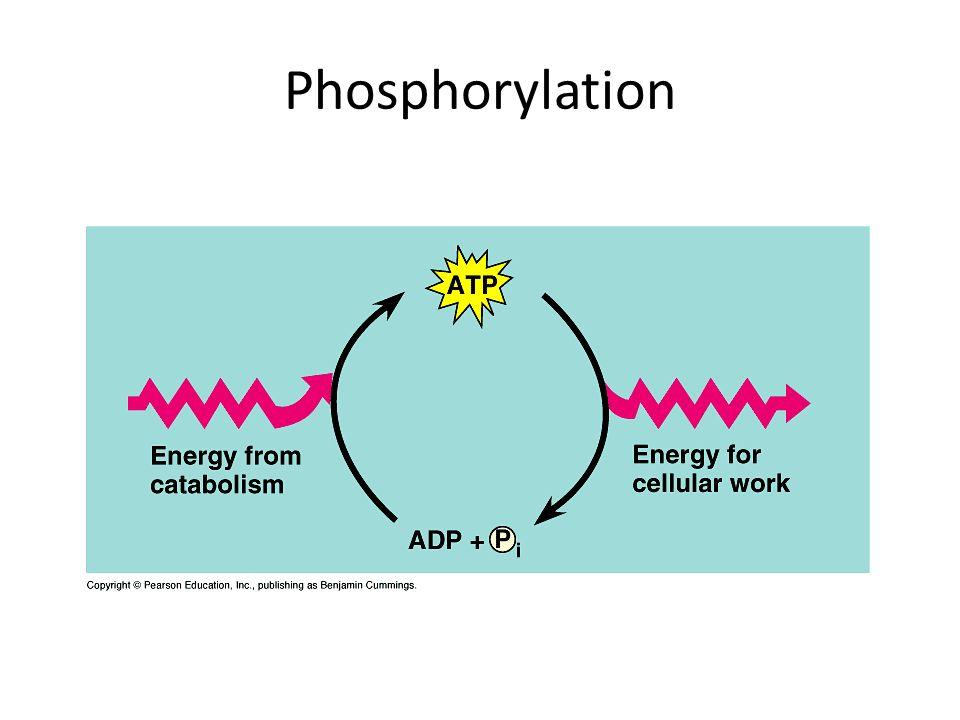 Phosphorylation