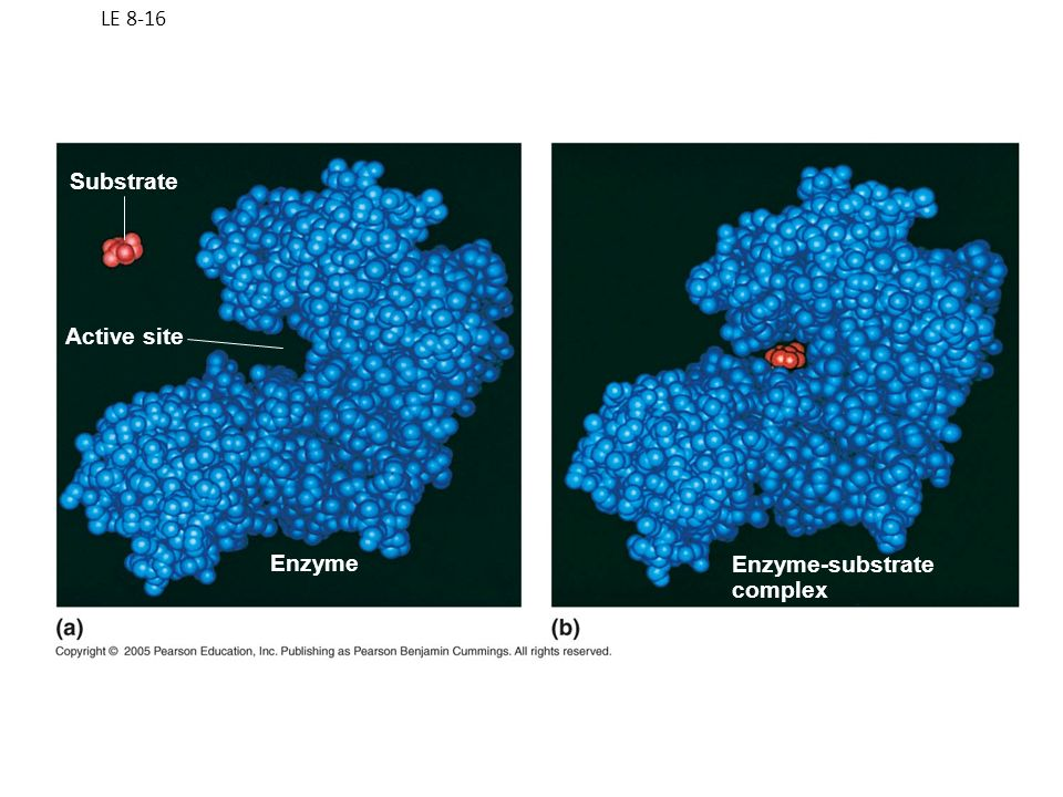 LE 8-16 Substrate Active site Enzyme Enzyme-substrate complex