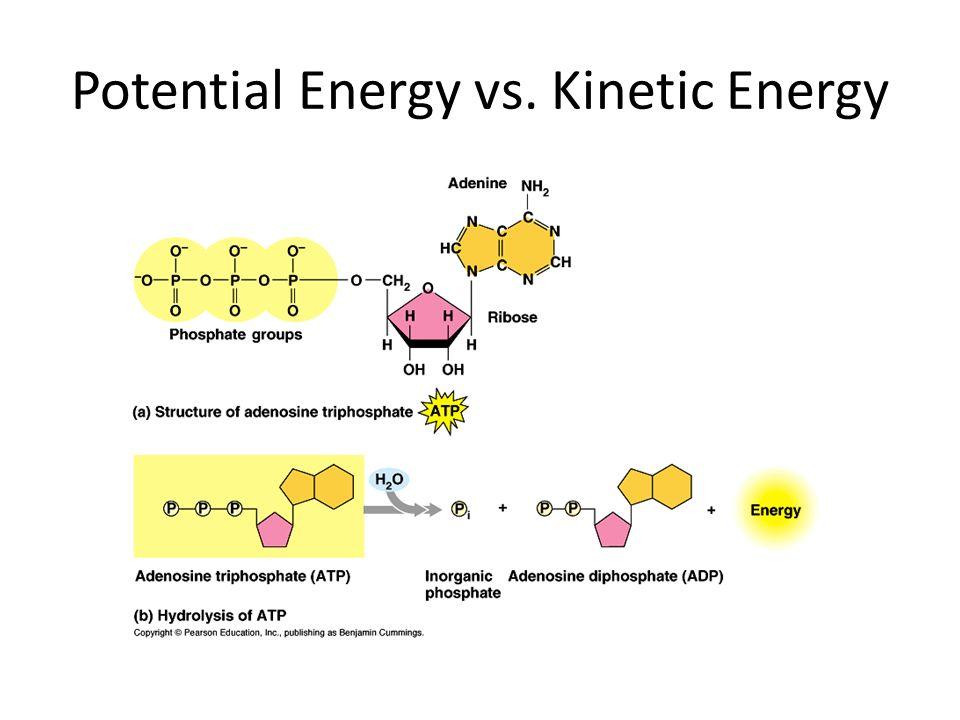 Potential Energy vs. Kinetic Energy