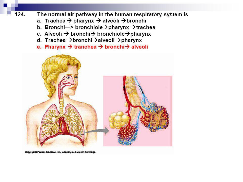 e.Pharynx tranchea bronchi alveoli 124.The normal air pathway in the human respiratory system is a. Trachea pharynx alveoli bronchi b. Bronchi> bronch