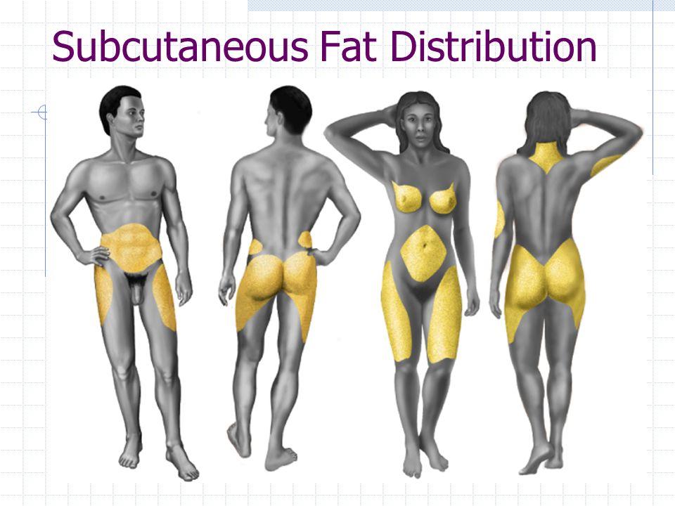 Subcutaneous Fat Distribution