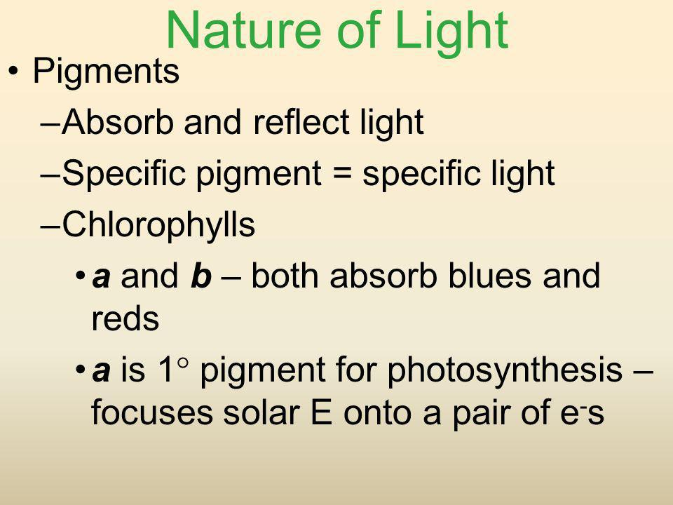 Nature of Light Pigments –Absorb and reflect light –Specific pigment = specific light –Chlorophylls a and b – both absorb blues and reds a is 1 pigmen