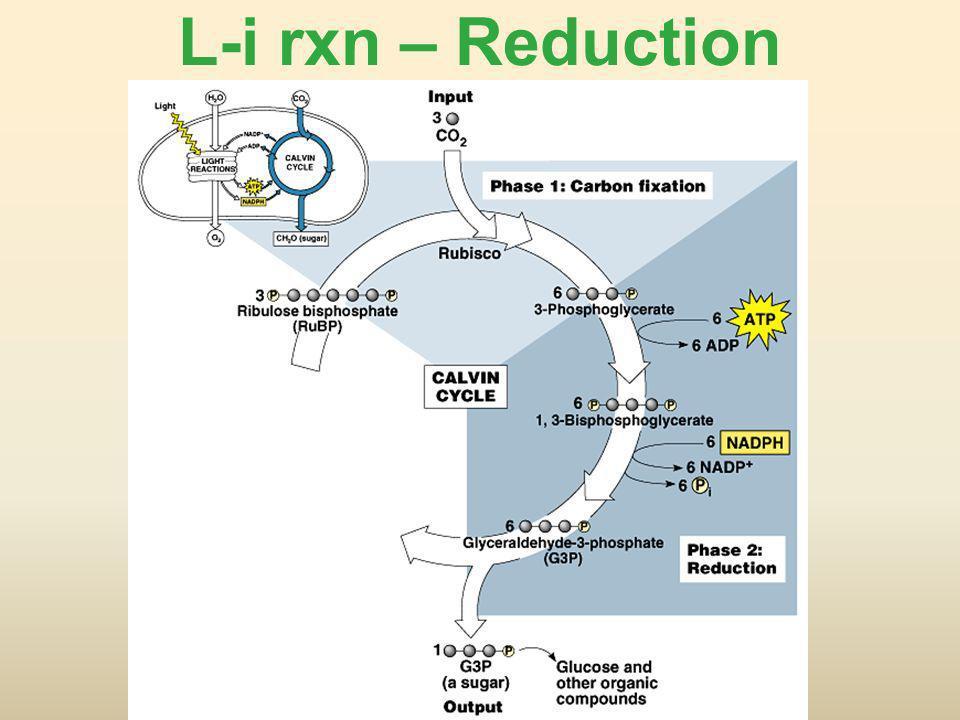 L-i rxn – Reduction