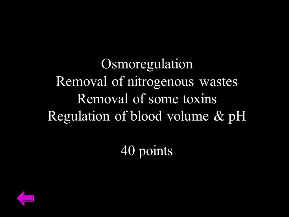 Osmoregulation Removal of nitrogenous wastes Removal of some toxins Regulation of blood volume & pH 40 points