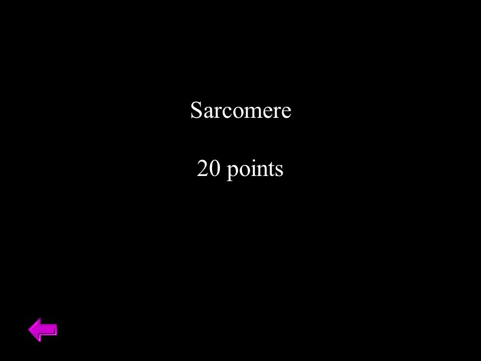 Sarcomere 20 points