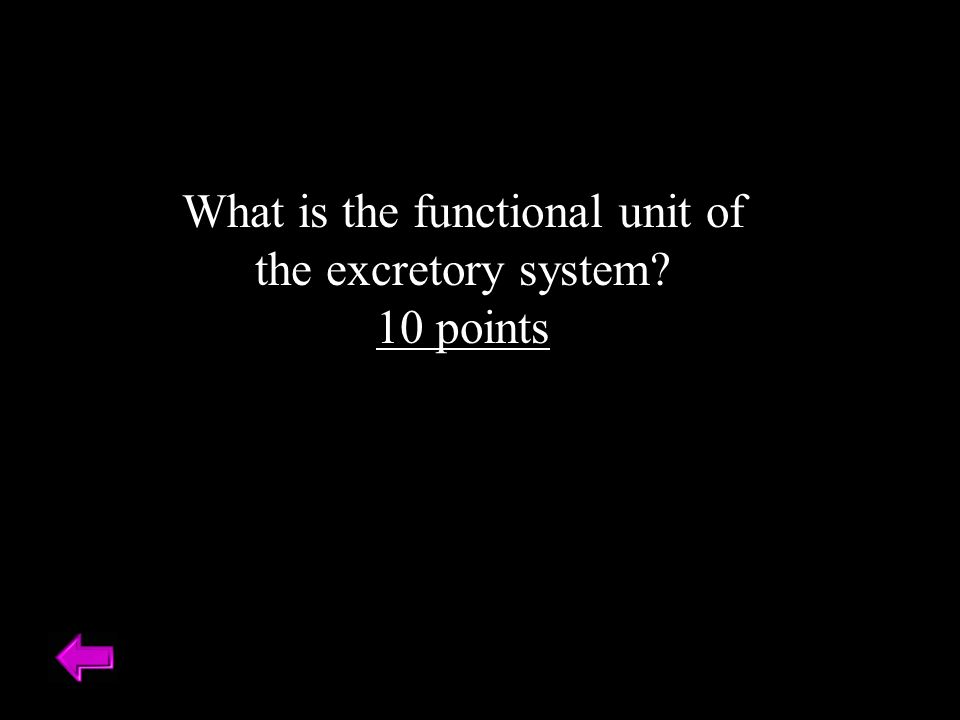 What is the functional unit of the excretory system 10 points