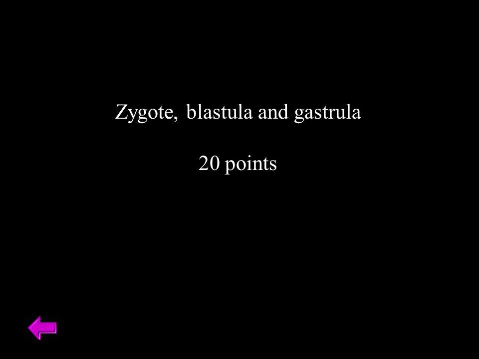 Zygote, blastula and gastrula 20 points