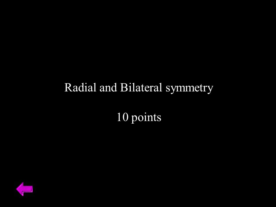 Radial and Bilateral symmetry 10 points