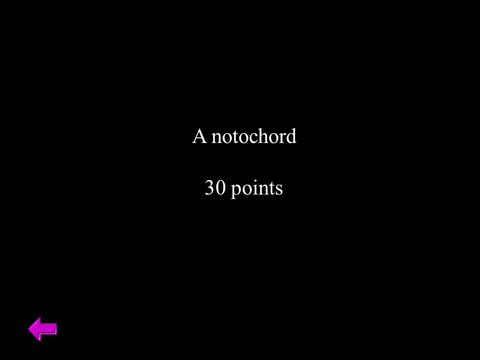 A notochord 30 points