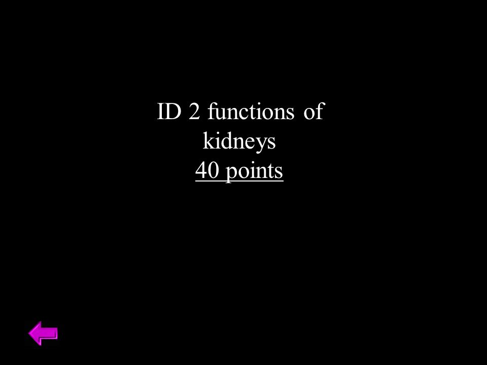 ID 2 functions of kidneys 40 points